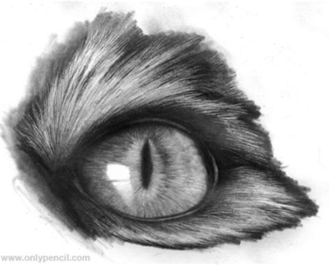 Realistic Cat Eyes Tutorial By Chandito On Deviantart