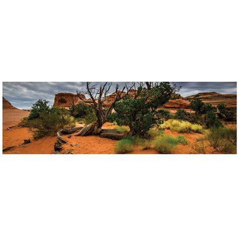 Desert Terrarium Background Galapagos Arid Terrarium Cling Background 11 125 X 36