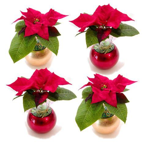 Mini Picture by 2 In Mini Poinsettia In And Gold Ornament