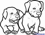 Pitbull Angry Drawing Coloring Realistic Pages Getdrawings sketch template
