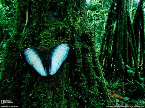 Rainforest Animal Wallpaper - the rainforest high definition desktop wallpapers hd