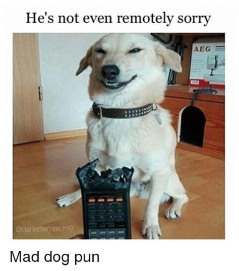 memes  dog puns dog puns memes