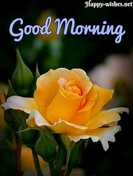 Best good morning flowers ideas and images on bing find what you good morning yellow rose mightylinksfo