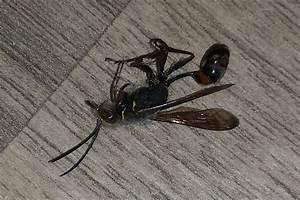 Wie Werde Ich Wespen Los : wie werde ich diese tiere los insekten fenster ungeziefer ~ Watch28wear.com Haus und Dekorationen