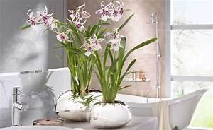 Blumen Für Schattige Plätze : pflanzen f r schattige pl tze in der wohnung home ideen ~ Michelbontemps.com Haus und Dekorationen