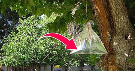 fliegen vertreiben terrasse fliegen vertreiben plastikbeutel mit m 252 nzen aufh 228 ngen