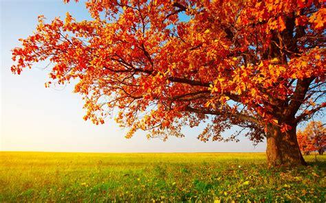Autumn tree wallpaper | 1920x1200 | #29075