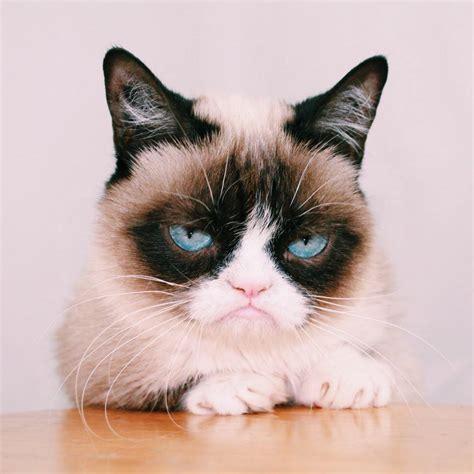 """Grumpy Cat On Twitter """"httptcochevpnhsxb"""""""