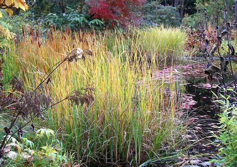 Garten Im Herbst Wässern by Ziergr 228 Ser Am Teichrand Ja Aber