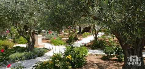 Garden Of Gethsemane Bible by Israel Bible Tours Tour Holy Land