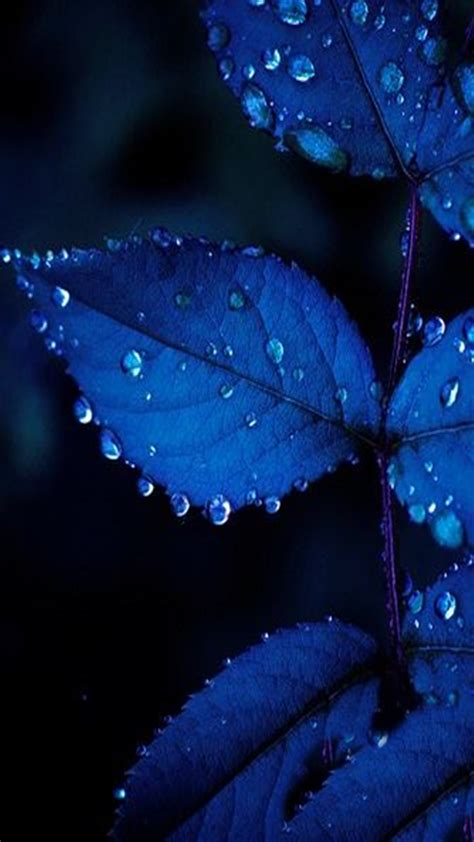 blue leaves    wallpapers