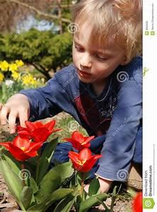 Tulpen Im Garten : kind tulpen im garten beobachtend stockbild bild 9054535 ~ A.2002-acura-tl-radio.info Haus und Dekorationen