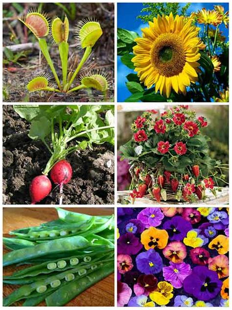 interesting plants to grow 12 easy and fun plants for kids to grow mental scoop