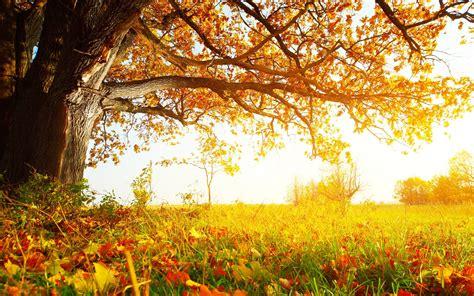 a tree in the fall fall tree hd 29504 2560x1600 px hdwallsource com