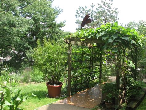 12 Best Images About Grape Arbor On Pinterest Warm