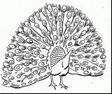 Peacock Feather Drawing Coloring Pages Getdrawings Printables sketch template