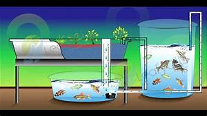 What Is A Chop Aquaponics System