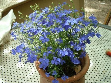 plante plein soleil en pot plantes vivaces ombre images