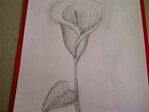 Zeichnungen Mit Bleistift Für Anfänger : calla zeichnen blume zeichnen zeichnen lernen f r anf nger youtube ~ Frokenaadalensverden.com Haus und Dekorationen