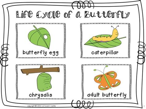 butterfly life cycle for preschool 4110 best images about preschool on 818