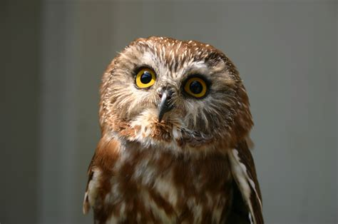 Owl Wallpapers by Owl Hd Wallpaper Background Image 2048x1360 Id