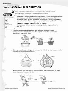 8hw Asexual Reproduction In Plants
