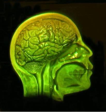 Brain Skull Adhesive Hologram Backing Holographic Studios