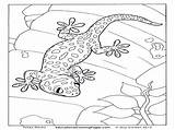 Gecko Leopard Coloring Pages Printable Print Colouring Getcolorings sketch template