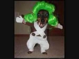 funny dog costumes!! - YouTube
