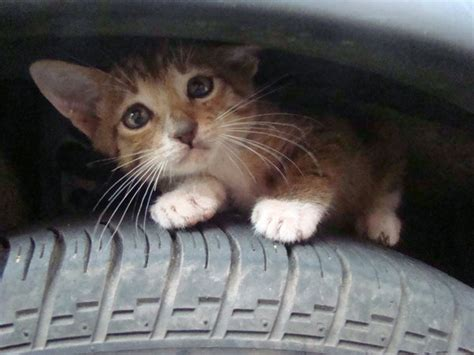 how to keep cats cars how to keep our pets winter safe jet pet resort