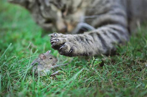 luxprivat warum bringen katzen maeuse mit nach haus