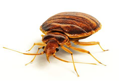 Parasiten Im Bett » Erkennen & Bekämpfen