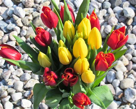 aneka bunga animasi bunga arti bunga