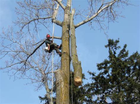 capella tree service canpages