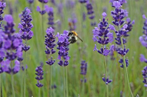 Poze : plantă, luncă, prerie, floare, insectă, botanică, închide, floră, flori sălbatice, violet ...
