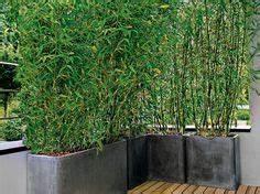 terrasse moderne en bois avec brise vue bambou en bac a With brise vue avec jardiniere 11 plantes de jardin le bambou fascinant et polyvalent
