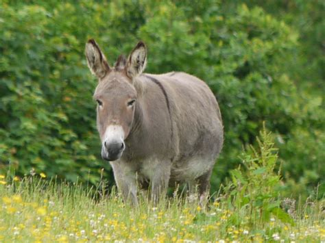 Donkey Animal Pictures Free Photos Wallpapers Download