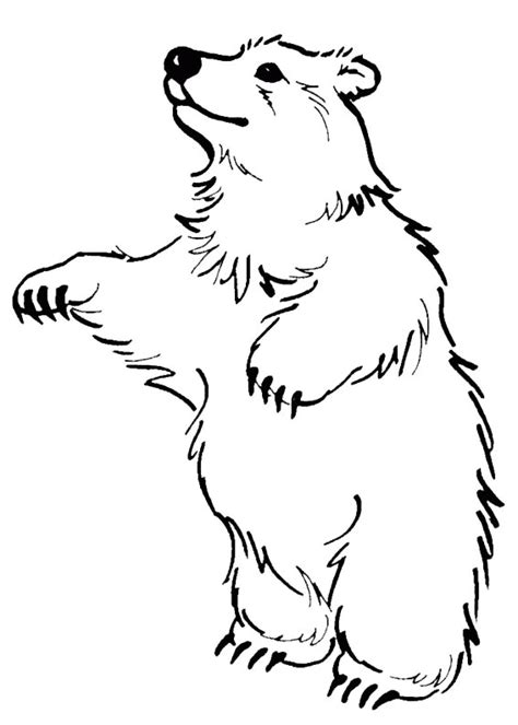 immagini da ricopiare per bambini 24 disegni di orsi da colorare pianetabambini it
