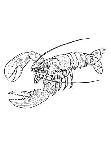 maine lobster coloring page super coloring