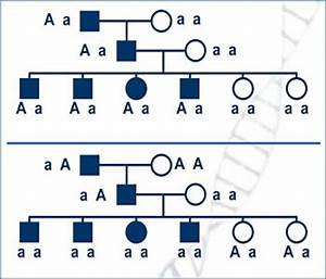 Association Studies & Linkage Disequilibrium Lesson 1 ...