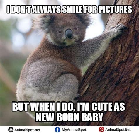 koala memes