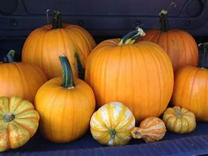 Family, Fun, At, The, Pumpkin, Patch