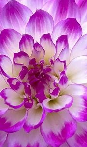 Flower Wallpapers for Android Mobile with 1440x2560 for LG ...