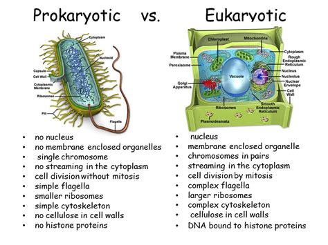 cell types  cell structure  biology