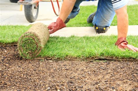 when to lay sod how to lay lawn turf best time to lay turf bury hill blog