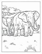 Coloring Elephant Realistic Challenges Above Credit Cowell Educationalcoloringpages Guy sketch template