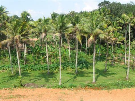 vastu tips  planting coconut tree  home