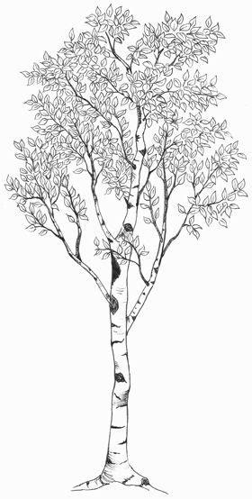 51+ Birch Tree Meaningful Tattoos Ideas