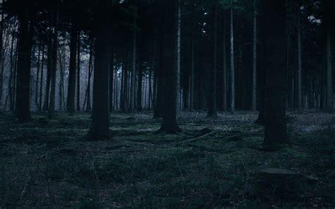 dark woodland wallpaper getwallsio