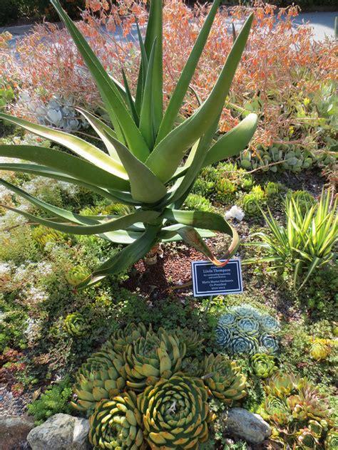 Succulent garden   Succulents, Planting succulents ...
